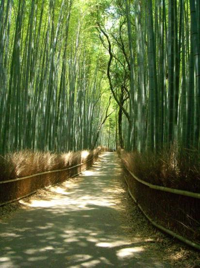 Foret d'Arashiyama-2